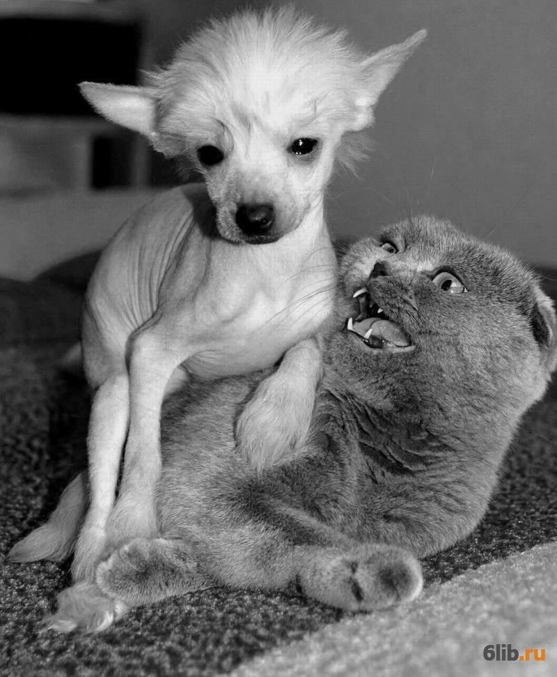 гипоксия самые смешные коты и собаки приколы самой